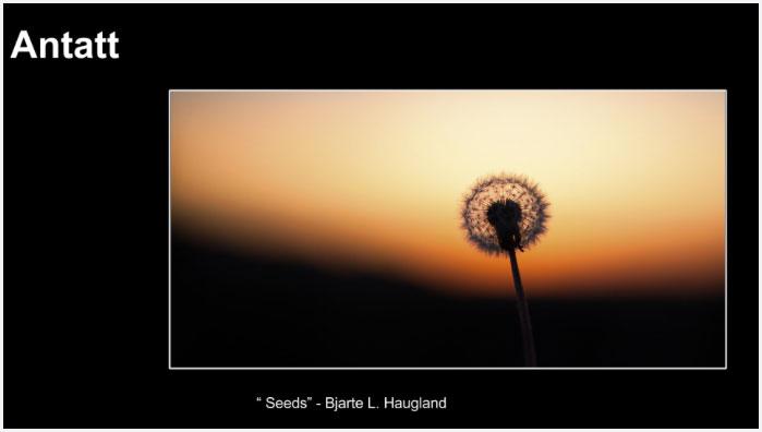 Antatt Seeds