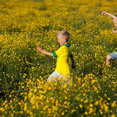 On yellow field